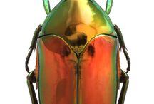 Beetleborgs / by Victor Alexeyev