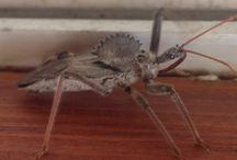 Bad Bugs!