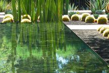 Succulent in a water garden