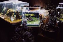 Aquascape / I love this spot the most in my house.