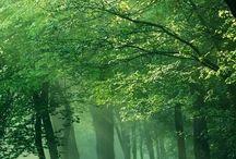 Naturens magi / Vackra naturbilder