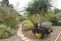 GARDENING: San Diego Plants / GARDENING: San Diego Plants.  Particularly looking for drought resistant plants and zero-scaping ideas. / by Sarhas Hamilton