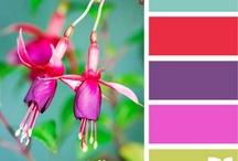 Color Inspiration / by Jenci Rose