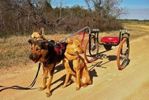 Dog carts