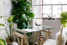 Plants / plants, flowers