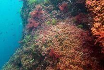 Photographie et biologie sous marine / Environnement subaquatique