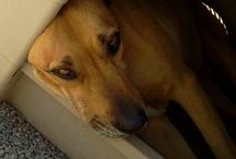 Dawgie