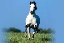 Horse Running HD Photo Download   Famous HD Wallpaper
