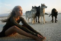 Wolfs/Dogs