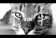 Two Stupid Cats Videos / Promo videos
