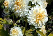 Dream flower garden