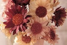 Fall Decorating Ideas / by Sarah @ Cozy.Cottage.Cute.