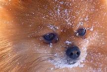 Animals are Sooo cute !  / by Belinda Stuetelberg
