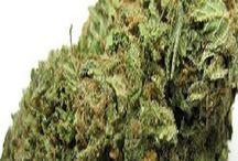 Marijuana Pictures / Marijuana Pictures