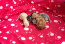 The Kittens / Maisie's kittens born 31/7/14