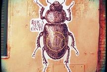 rome street art / by Sezgi Uygur