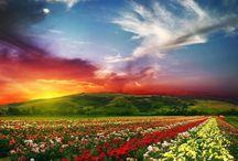 Colorful skies