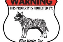 Blue Heeler Signs and Pictures / Warning and Caution Blue Heeler Signs. https://www.signswithanattitude.com/blue-heeler-signs.html