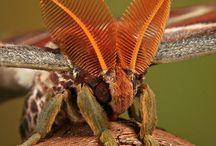 Moshi / Moshiga djur och insekter