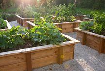 Raised veg beds