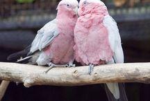 """Love Birds """"smile"""""""