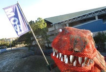 Recyclosaurus Rex / Meet Recyclosaurus Rex. I taught my dinosaur to recycle, I bet yours can't do that. / by MOSI Tampa