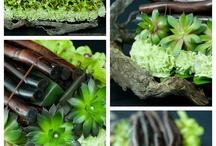 plants arrangements