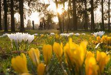 Frühling für Aufblühende / ...die das Gras wachsen hören und Schmetterlinge spüren möchten.