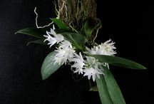 Orchid mounted