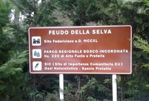 Parco Naturale Regionale Bosco Incoronata / Dall'entroterra al mare, alla scoperta del territorio pugliese