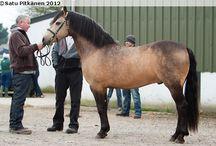 Nice Stallion