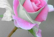 Λουλουδιαα