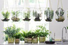 Farne - perfekte Pflanzen fürs Bad