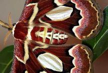 Borboletas,mariposas e outros animais / by Nossa Mãe