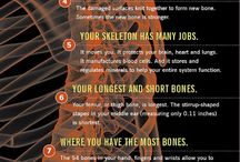 Interesting facts about your bones