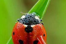 Ladybird Love / by Viv Thomas