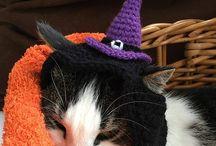 Crochet for cat & dog