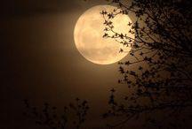 moon-luna®