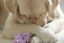 Dogs / by Dale Bernard