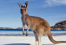 ETG Nature Australia / E: travel@exclusivetravelgroup.com | Tel: +64 (7) 579 3320 | USA Tollfree: 1-866 5317 498 Australia's splendid isolation as the world's largest island or the world's oldest continent has had a profound effect on the evolution of its animals and plants. The sheer age of the landmass and its division by sea from other continents allowed nature to have her way. The result is a range of plants and animals that are found nowhere else on earth. Nature at her most unique.