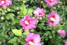 Blumen schnitt/ pflege
