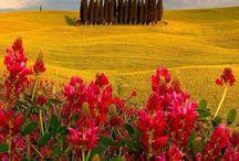 Flowers landscape / Art