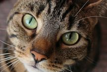 """Athena Cat Goddess Wise Kitty / """"Some cat goddess wisdom and life with a creative Mum""""  A popular UK cat blog about a rescue cat and her writer human  #cats #rescuecat #petblog"""