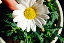 Цветы / Цветы-сокровища природы