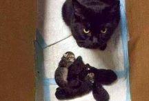 Mummy and kitty