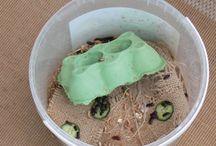 Mealworm farming
