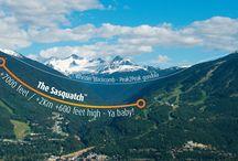 Longest Zipline in Canada & USA! / The Sasquatch - Ziptrek's newest, longest and highest zipline yet! / by Ziptrek Ecotours