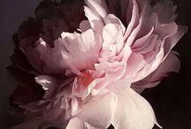Květy a stín