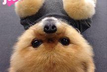 jiff dog