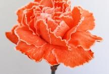 carnations, flowers, art